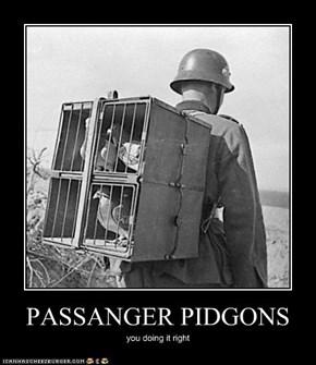 PASSANGER PIDGONS