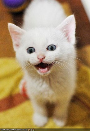 Cyoot Kitteh of teh Day: Smile Like You Mean It