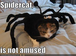 Spidercat,  is not amused