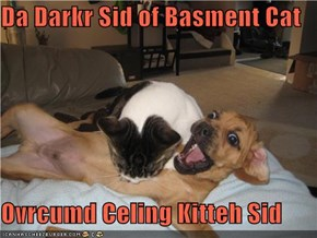 Da Darkr Sid of Basment Cat  Ovrcumd Celing Kitteh Sid