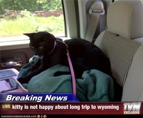 Breaking News - kitty is not happy about long trip to wyoming