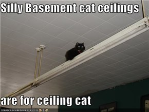 Silly Basement cat ceilings   are for ceiling cat