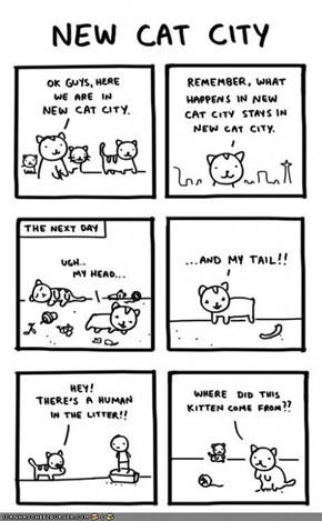 Kitteh Komic of teh Day: New Cat City