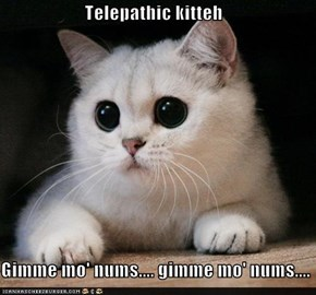 Telepathic kitteh  Gimme mo' nums.... gimme mo' nums....