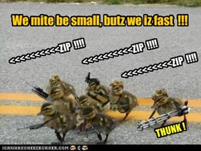 We mite be small, butz we iz fast  !!!
