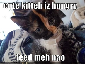 cute kitteh iz hungry  feed meh nao