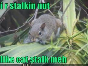 i r stalkin nut  like cat stalk meh