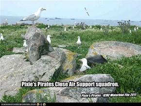 Pixie's Pirates Close Air Support squadron.