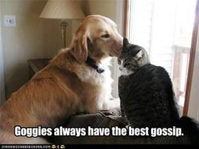 Goggies are our friends: Neighborhood watchgoggie