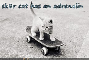 sk8r cat has an adrenalin