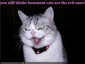 you still thinks basement cats are the evil ones??
