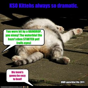 KSO Kittehs always so dramatic.