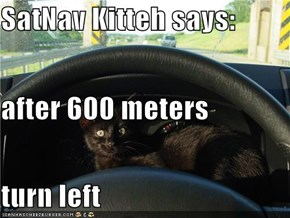 SatNav Kitteh says: after 600 meters turn left