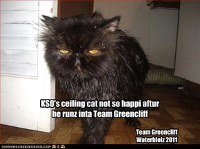 KSO's ceiling cat not so happi aftur he runz inta Team Greencliff