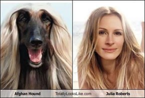 Afghan Hound Totally Looks Like Julia Roberts