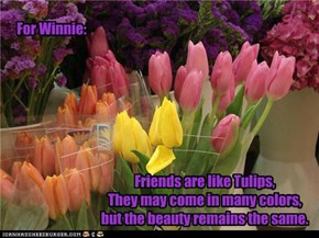 Friends are like Tulips
