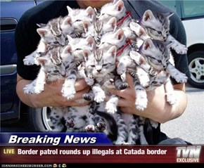Breaking News - Border patrol rounds up illegals at Catada border