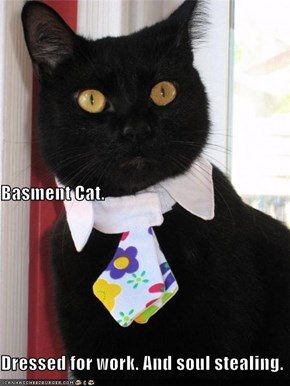 Basment Cat. Dressed for work. And soul stealing.