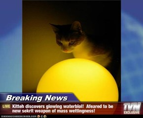 Breaking News - Kitteh discovers glowing waterblol!  Afeared to be new sekrit weapon of mass wettingness!