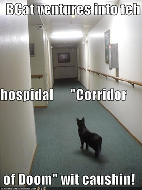 "BCat ventures into teh hospidal      ""Corridor  of Doom"" wit caushin!"