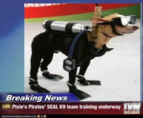 Breaking News - Pixie's Pirates' SEAL K9 team training underway