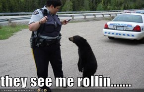 they see me rollin.......