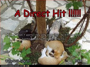 A Direct Hit !!!!!!
