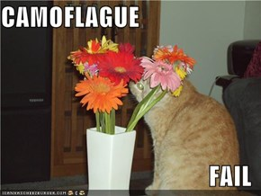 CAMOFLAGUE  FAIL