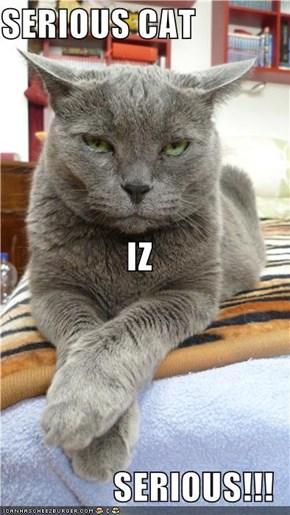 SERIOUS CAT IZ SERIOUS!!!