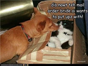 dis nawt teh mail  order bride ai wants  ta put upz with!