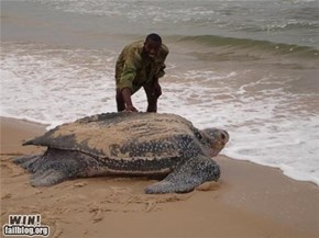 Mother Nature FTW: Giant Ancient Turtle