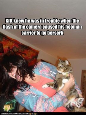 Kitt knew he was in trouble when the flash of the camera caused his hooman carrier to go berserk