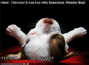 whee - I beweev Iz can fwy wike Superman, Wonder Dog!     z-z-z-z-z-z Z                                z-z-z-z-z-z-