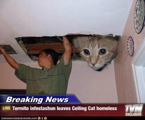 Breaking News - Termite infestashun leaves Ceiling Cat homeless