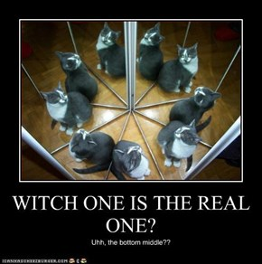 WITCH ONE IS THE REAL ONE?
