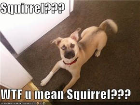 Squirrel???  WTF u mean Squirrel???
