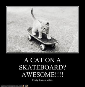 A CAT ON A SKATEBOARD? AWESOME!!!!