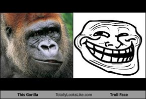 This Gorilla Totally Looks Like Troll Face