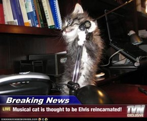 Breaking News - Musical cat is thought to be Elvis reincarnated!