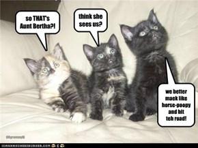so THAT's Aunt Bertha?!