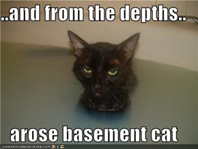 ..and from the depths..  arose basement cat
