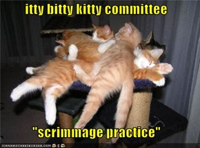 """itty bitty kitty committee  """"scrimmage practice"""""""