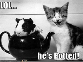 LOL...  he's Potted!