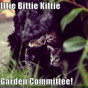 Ittie Bittie Kittie  Garden Committee!