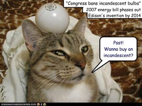 """Would you buy a light bulb from this lolcat?"""