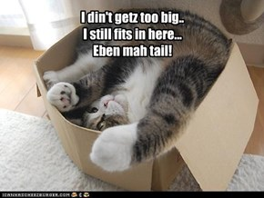 I din't getz too big.. I still fits in here... Eben mah tail!
