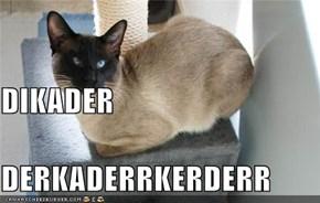 DIKADER DERKADERRKERDERR