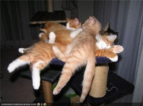 Cyoot Kittehs of teh Day: Cat Pile!!!!!1