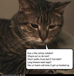 tom tabby seeks female feline