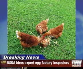 Breaking News - USDA hires expert egg factory inspectors